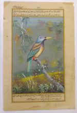 Load image into Gallery viewer, KingFisher Bird Art Collection