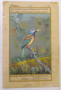 KingFisher Bird Art Collection