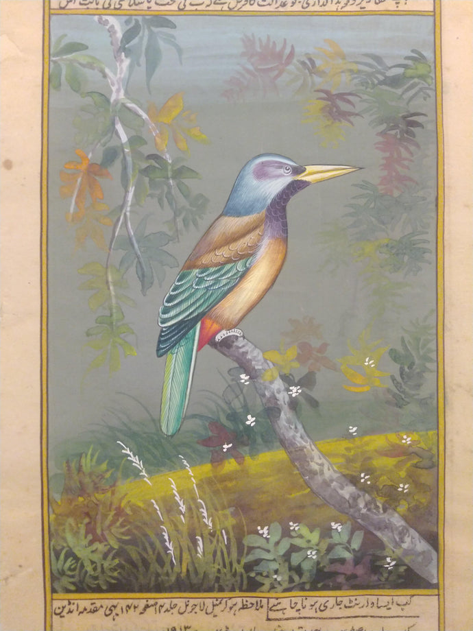 Bird Painting Art Collection