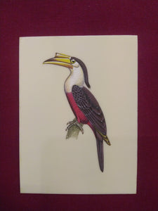 Great HornBill Bird Indian Miniature Painting Exotic - ArtUdaipur