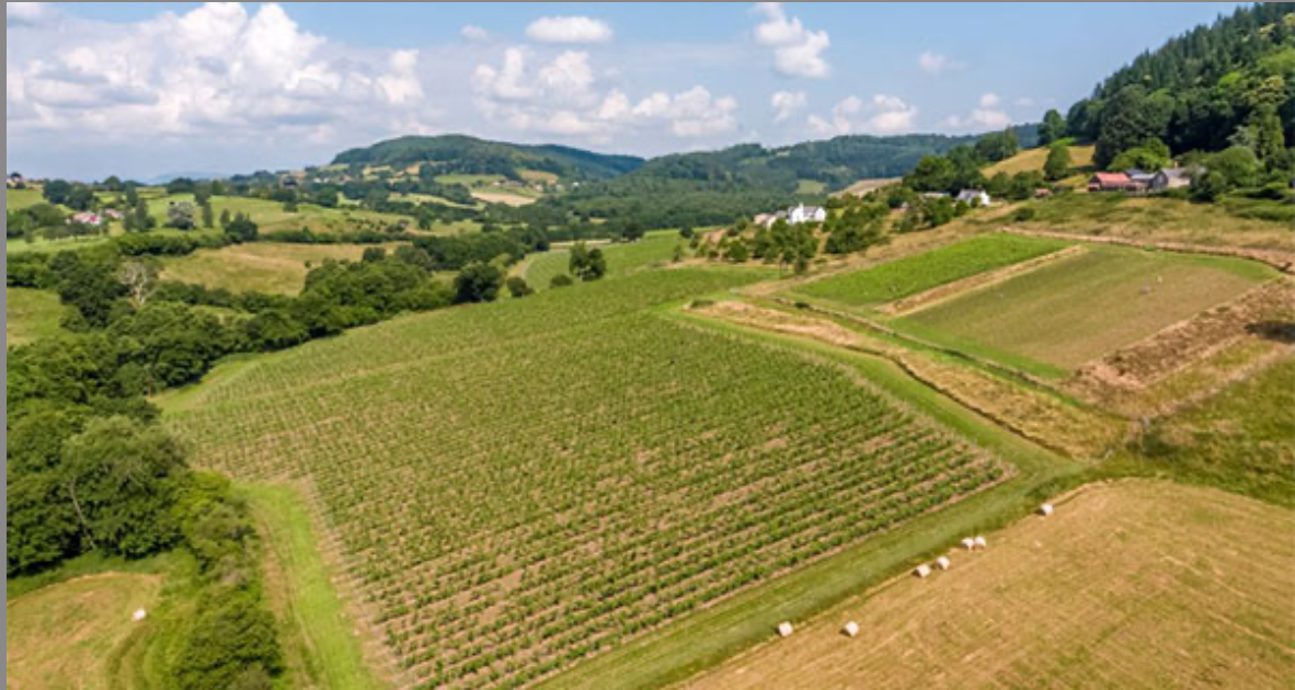 Ancre Hill, the organic and biodynamic Welsh winery.