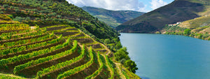 Where to Buy Portuguese Wine in the UK? - HINT: Its Butlers!