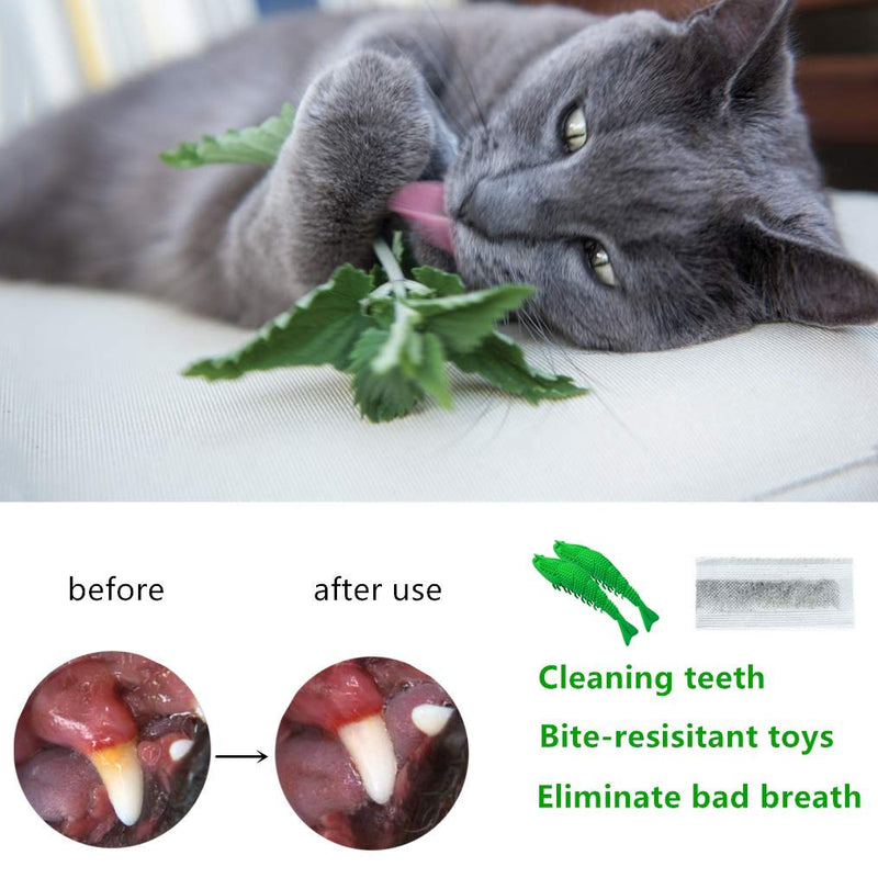 Cat Toothbrush Catnip Chew Treat Crayfish Toy for Kitten Cats Teeth Cleaning Massager