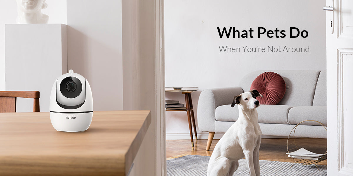 what pets do when you're not around?