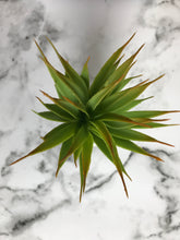 Load image into Gallery viewer, Grassula 30 cm