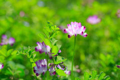 astragalus is an active ingredient in cbd made by Medsana