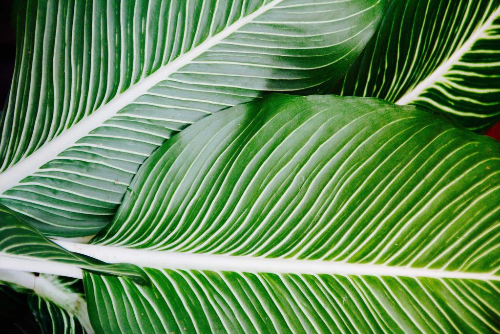 close up of green and white palm leafs