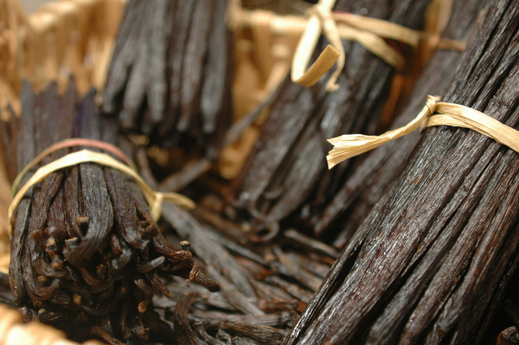 close up of vanilla beans tied in bunches