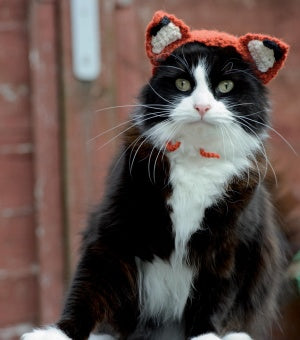 Cats In Hats - Feline Fox (Crochet)