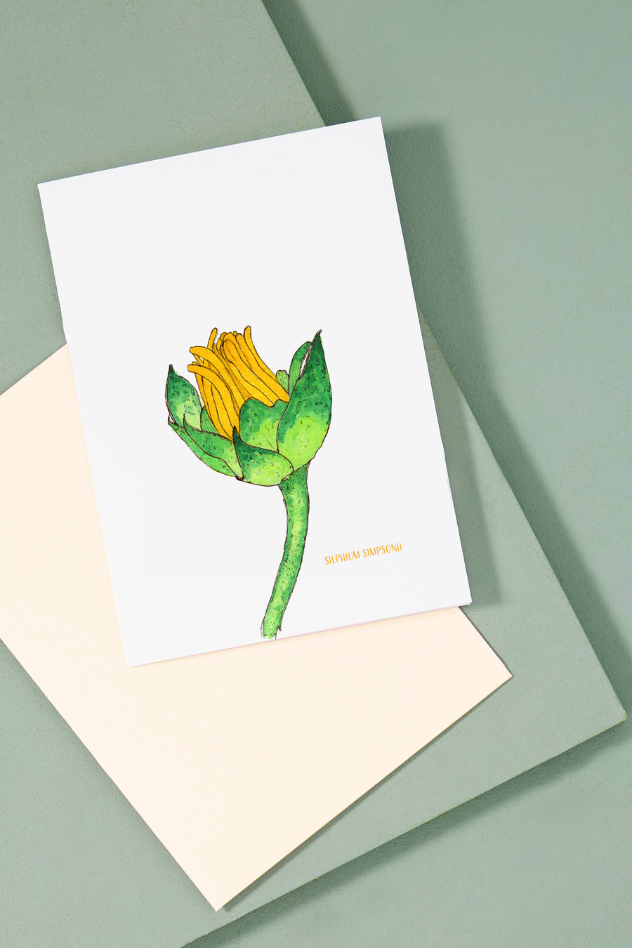 Silphium Simpsonii | Flower Greeting Card