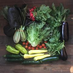ORGANIC VEGGIE BOX - SARASOTA - Saturdays, February 6-27, 2021, 8:00 AM - 12 NOON - Downtown Sarasota: 4 weeks x $25/week = $100.