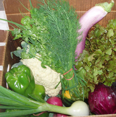 Worden Farm Membership: ORGANIC VEGGIE BOX [at Delivery Sites in SWFL]