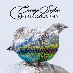 Craig Solin Photography Montana Wildlife Nature Photographic Art