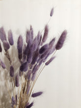Load image into Gallery viewer, Bunny Tails - Preserved Lagurus