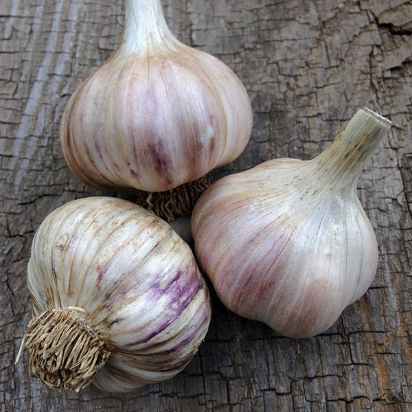 Headstrong Garlic Seeds