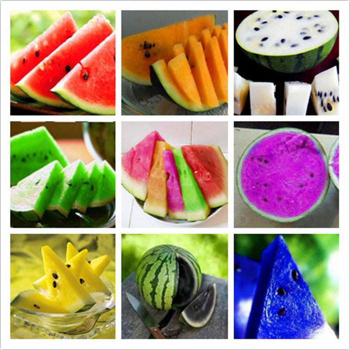 Colorful Watermelon Fruit Seeds