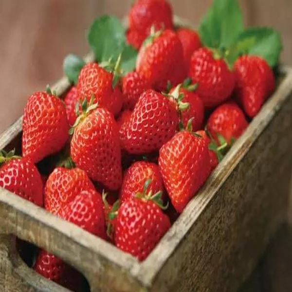 Four Seasons Fragaria Strawberry Seeds