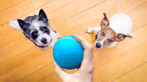 LED PET MOTION BALL - GoYeah