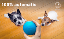 Load image into Gallery viewer, LED PET MOTION BALL - GoYeah