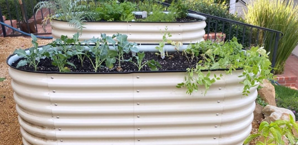 Useful Tips for Raised Bed Gardening