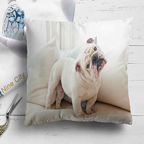 Nine City A Cute English Bulldog on CouchThrow Pillow Cushion Covers Set of 2 Decorative Square Accent Pillow Case 18 X 18