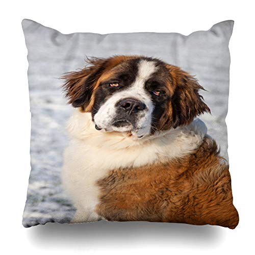 Ahawoso Decorative Throw Pillow Cover Square 18x18 Inches Friend Saint Outdoor Front Animal Bernard Animals Pet Cute Wildlife Nature Alone Winter Big Canine Zippered Cushion Case Home Decor Pillowcase
