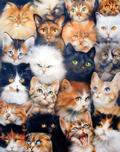 "Load image into Gallery viewer, 40"" x 50"" Blanket Comfort Warmth Soft Plush Throw for Couch Cute Cats Breed Collage Pet"