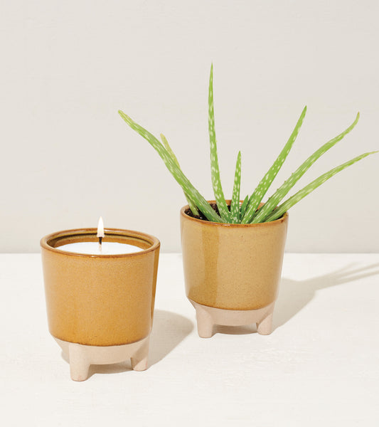 Burn, plant, and grow! This ceramic candle vessel transforms into a planter after the flame has burned down and includes a complete kit to grow aloe. Shown here with aloe fully grown and candle flame.