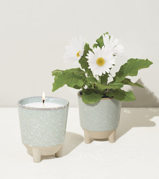 Burn, plant, and grow! This ceramic candle vessel transforms into a planter after the flame has burned down and includes a complete kit to grow daisies. Shown here with daisies fully grown and candle flame.