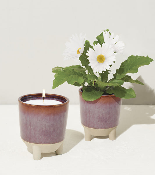 Burn, plant, and grow! This ceramic candle vessel transforms into a planter after the flame has burned down and includes a complete kit to grow daisies. Shown here fully bloomed with candle flame.