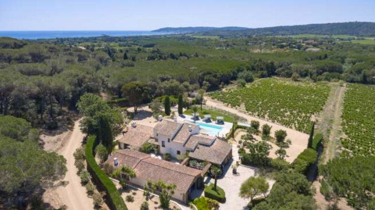 SAINT TROPEZ-VINEYARDS-3885374VS-EN