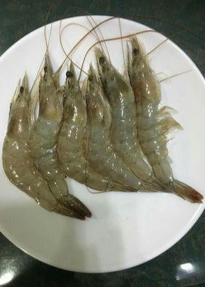 Hipon Puti ( White Shrimp ) ( Approx. 26 - 35pcs/kg ) - Mr. Gulay Online Store