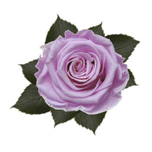 Load image into Gallery viewer, Preserved KIARA Roses Splendid (6 / w-box)