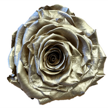 Load image into Gallery viewer, Preserved KIARA Roses Solitary (1 / w-box)