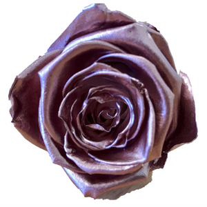 Preserved KIARA Roses Splendid (6 / w-box)