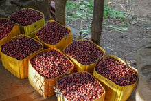 Load image into Gallery viewer, Ethiopia Organic Limu - Piccolos.coffee