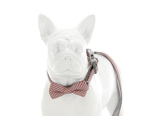 Red White and Navy Stripe Bow Tie - Targa Pet Shop