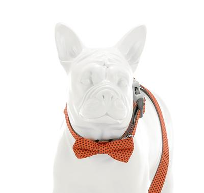 Orange Star Bow Tie - Targa Pet Shop