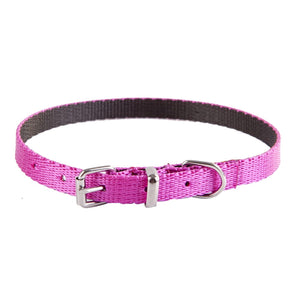 Dingo Energy Dog Collar for Small Dogs - Targa Pet Shop