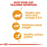 Royal Canin Intense Beauty Care Pouches in Gravy Adult Cat Food - Targa Pet Shop