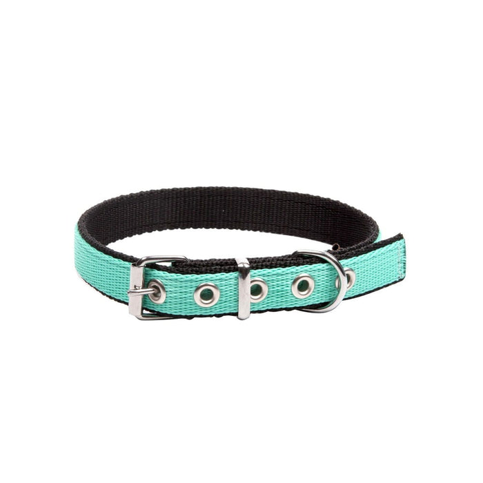 Dingo Energy Collar - Targa Pet Shop