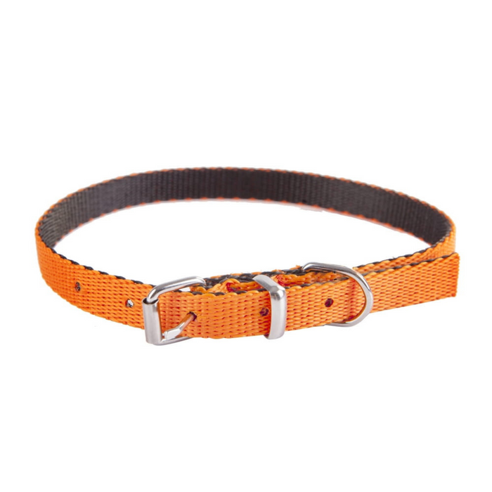 Dingo Energy Dog Collar for Small Dogs Orange