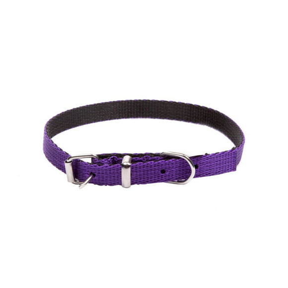 Dingo Energy Dog Collar for Small Dogs Purple