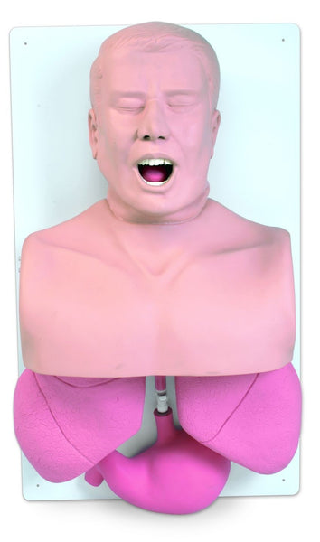 Adult Airway Management Trainer Simulator