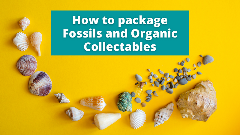 How to Package Fossils, Feathers, and Shells for Shipping or Storage
