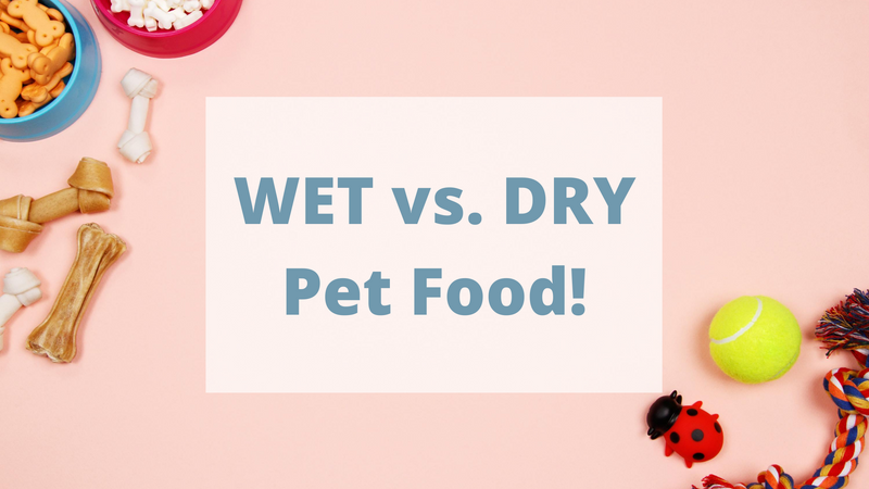 Benefits of Dry Food and Wet Food for Pets