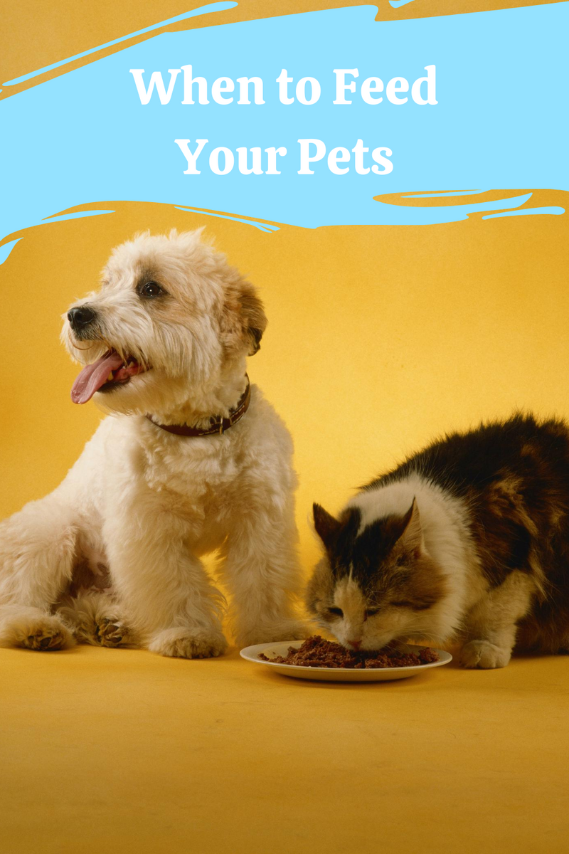 When to Feed Your Cat or Dog