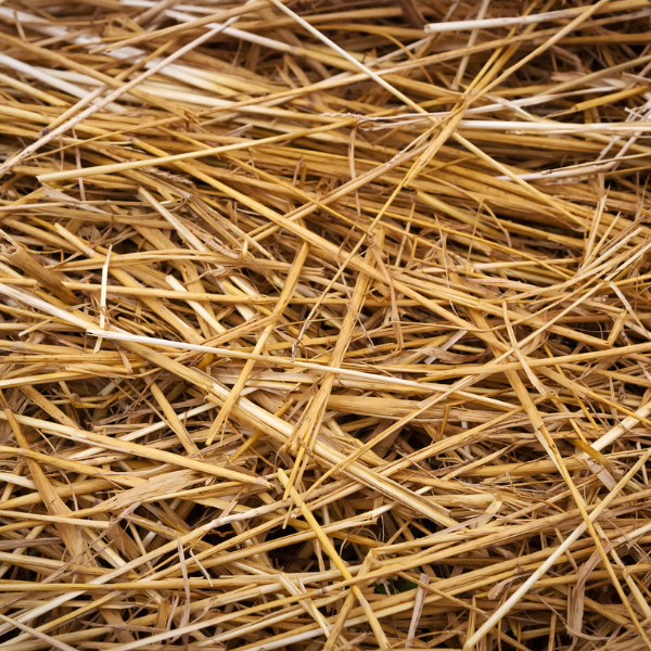 What You Need to Know About Biodegradable Packaging: Biomass Resources