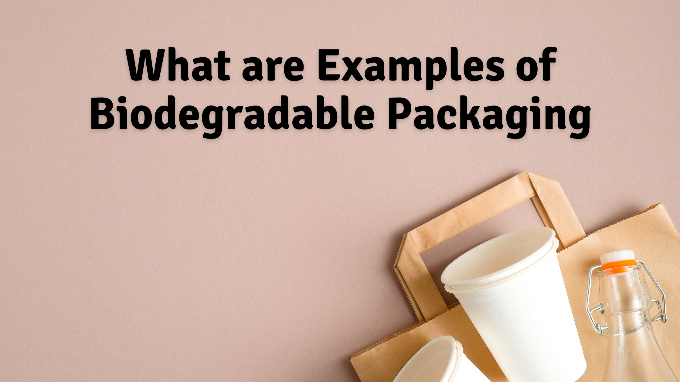 What You Need to Know About Biodegradable Packaging: What are Examples of Biodegradable Packaging?