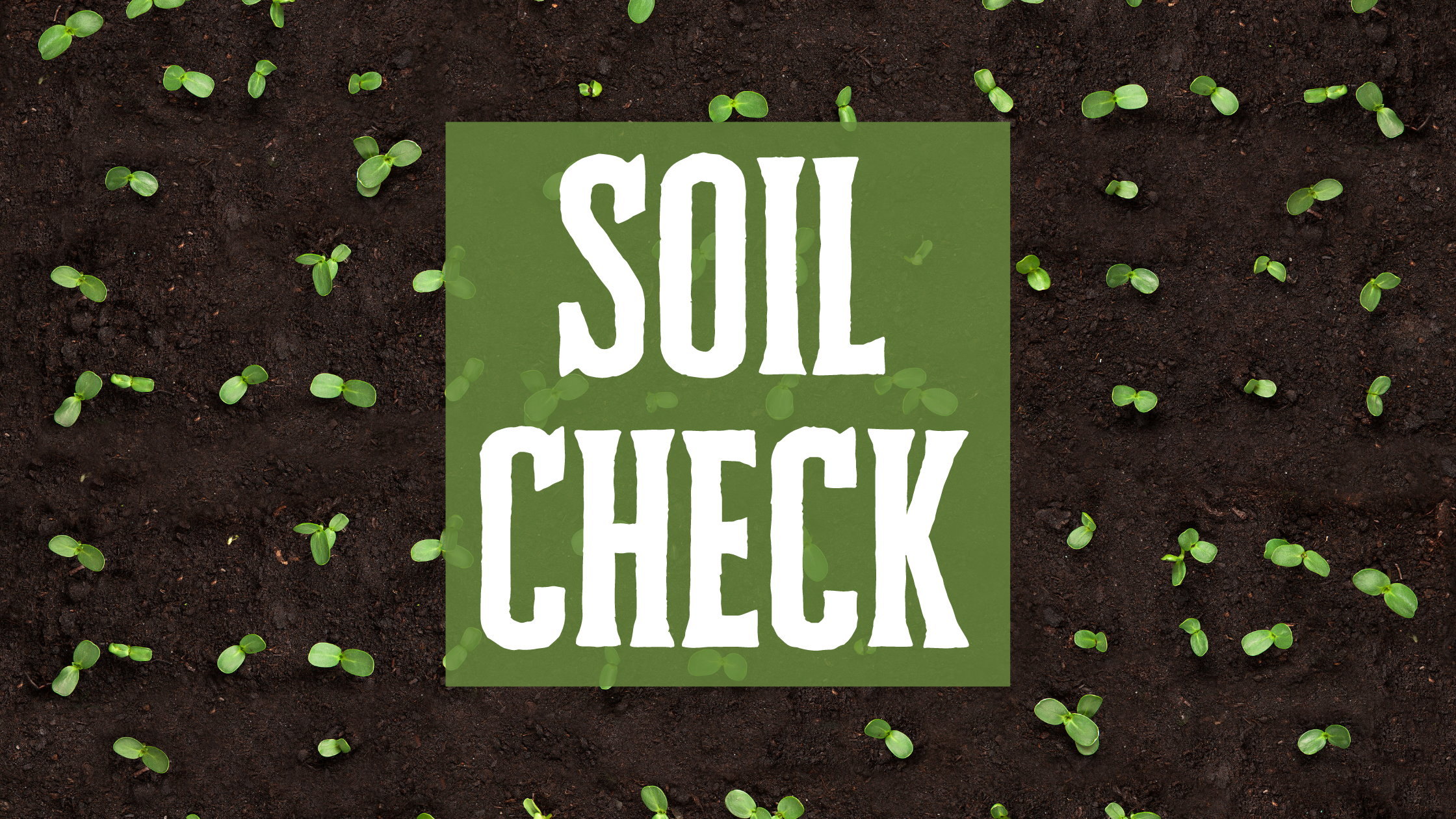 How to Preserve Your Garden During the Winter: Soil Check